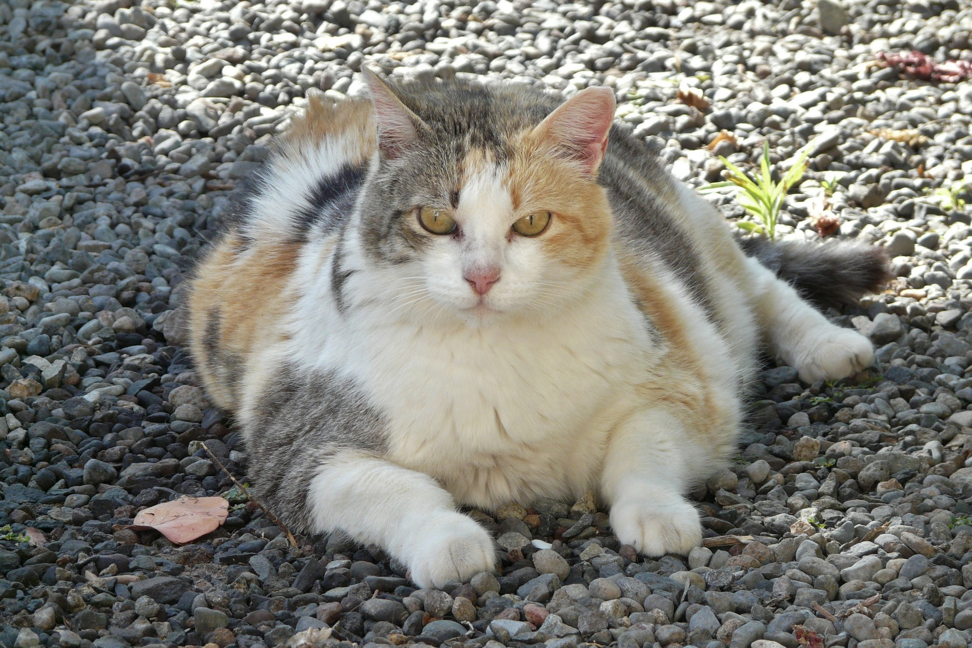 Cat Weight Loss Dry Food